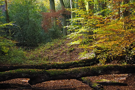 automne, nature, arbres, paysage, Forest, Farbenspiel, feuilles