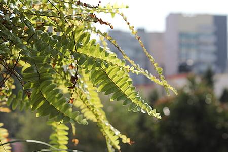 thực vật, Sân vườn, Ban công, màu xanh lá cây, Hoa, Thiên nhiên, Hoa