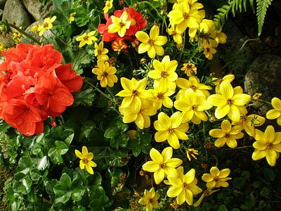 花, ガーデン, 植物, 自然, イエロー, 花, 春