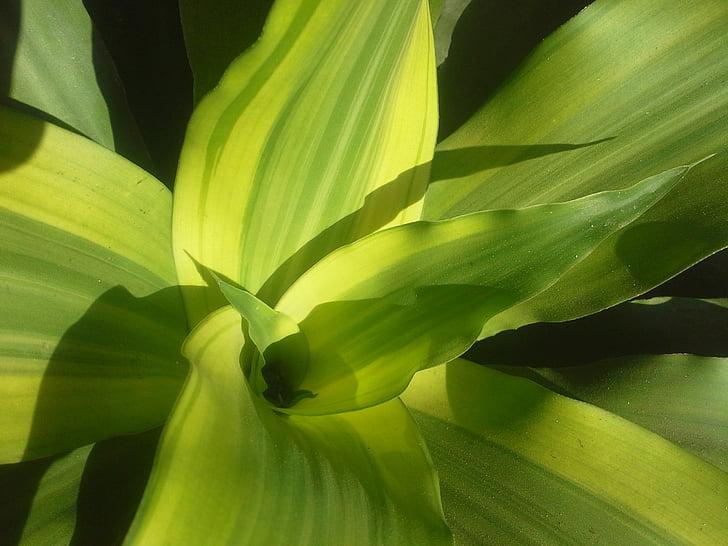 taim, rohelised lehed, lehed, loodus, roheline, õnnelik mälu, taimne
