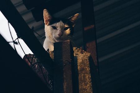 cat, pet, animal, black, white, fur, outside