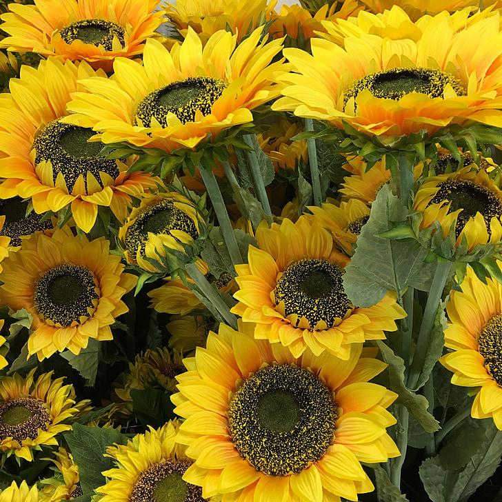 gira-sol, flors, groc, flors d'estiu, vibrants, flora, brillant