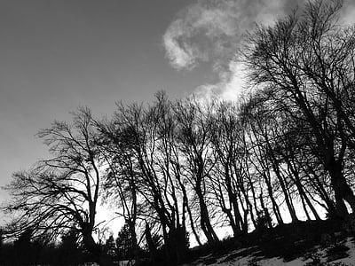 paisatges, natura, arbres, contrasten, llum i ombra, vent, paisatge d'hivern
