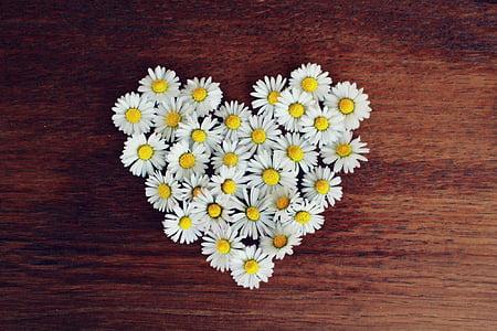 tratinčica, srce, tratinčica srce, ljubav, u obliku srca, romantična, proljeće