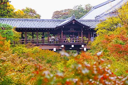 temple, tofukuji temple, shrine, scenery, maple leaves, colorful, kyoto