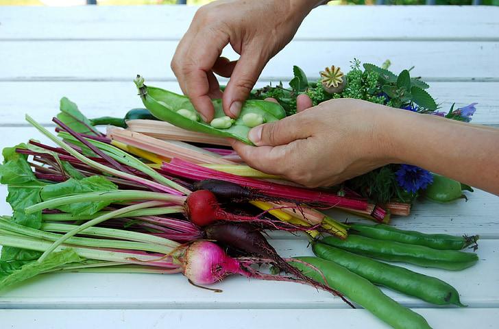 hands, vegetables, cultivation, summer