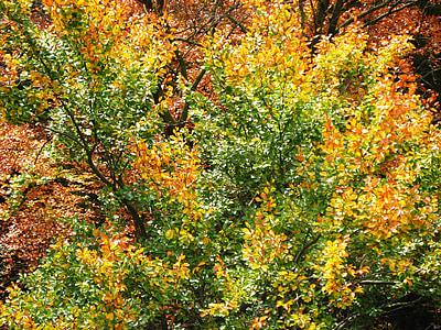 το φθινόπωρο, δέντρο, φύλλα, φύλλωμα πτώσης, δάσος, Φθινοπωρινό δάσος, φυλλοβόλο δέντρο
