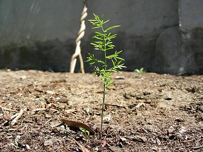 thực vật, nảy mầm, Sân vườn, rừng, đầu tiên bùng phát, dịch của lá, màu xanh lá cây