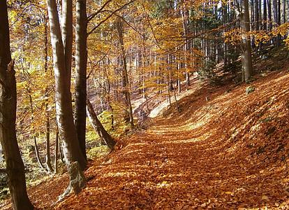 το φθινόπωρο, δάσος, φύλλα, πεσμένα φύλλα, δέντρα, διαδρομή, φυλλοβόλο δέντρο
