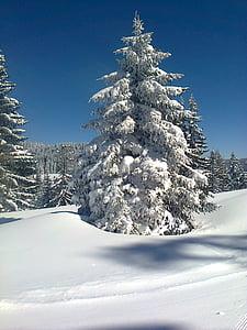 neu, arbre, fred, hivernal, l'hivern, natura, bosc