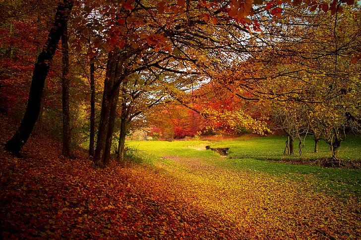 Outono, floresta, floresta, natureza, Outono, paisagem, temporada
