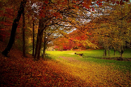 autumn, forest, woods, nature, fall, landscape, season