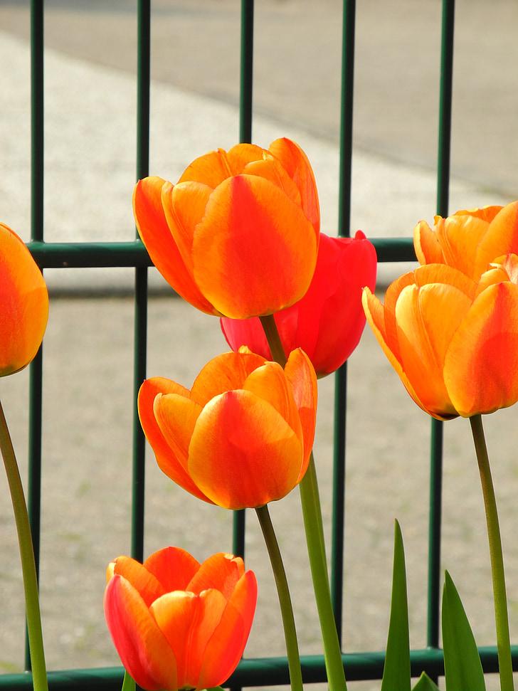 spring, garden fence, springtime
