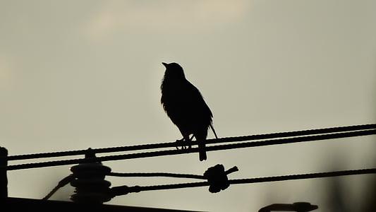 birds, fly, beak, young