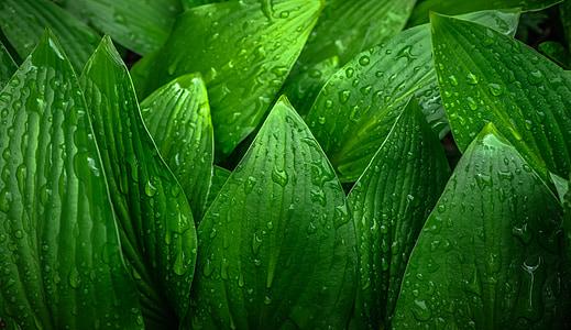 levél, természet, zöld, tavaszi, hwalyeob, absztrakt, növények