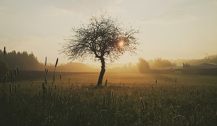 arbre, matin, nature, lever du soleil, humeur, Dim, morgenstimmung