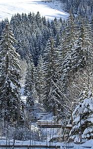 paisatge de neu, cobert de neu, l'hivern, sol, espurna, neu, arbres
