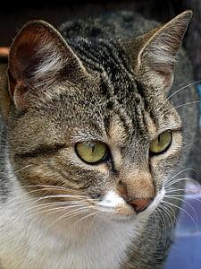 cat, feline, whiskers