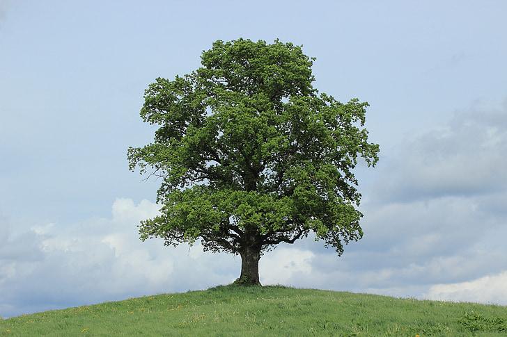 fa, zöld, levelek, tavaszi, idő, év, évszakok, négy évszak