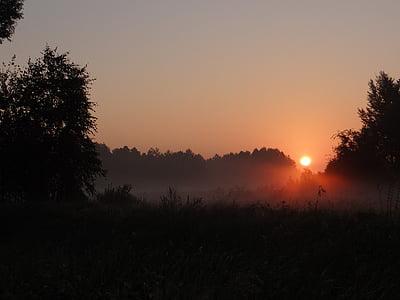 dawn, the sun, the fog, meadow