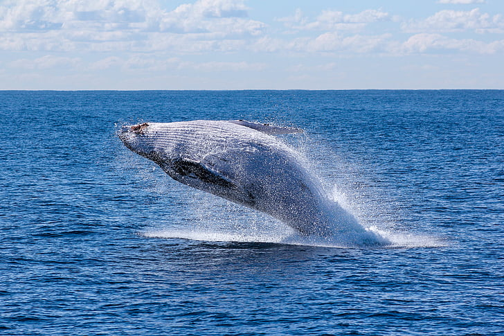 Белый, Кит, океан, мне?, воды, Голубая вода, синее море