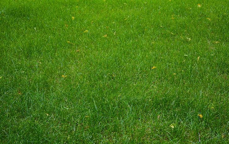 trávnik, tráva, pole, lúka, letné, Zelená, Príroda