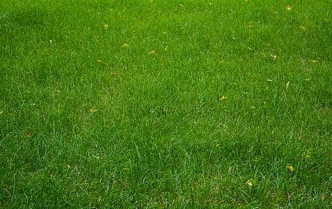 gespa, herba, camp, Prat, l'estiu, verd, natura