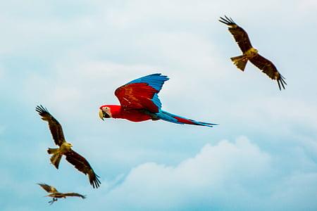 птах, дзьоб, перо, тварини, літати, DOM, хмари