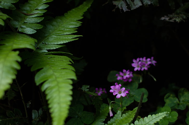 planta, flor, natura
