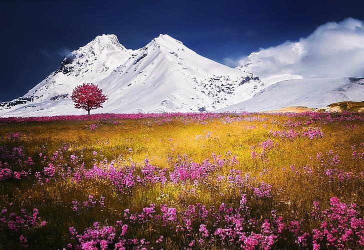 Alpes, árvore, neve, natureza paisagem flores grama, Verão, azul, Europa