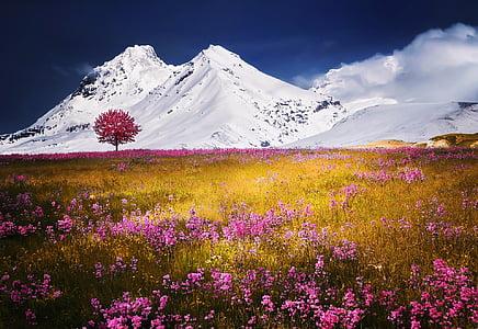 Alpen, pohon, salju, alam lanskap bunga rumput, musim panas, biru, Eropa