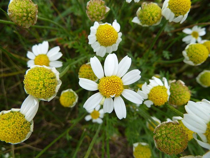 narave, cvet, cvet, cvet, rastlin, bela, lep cvet