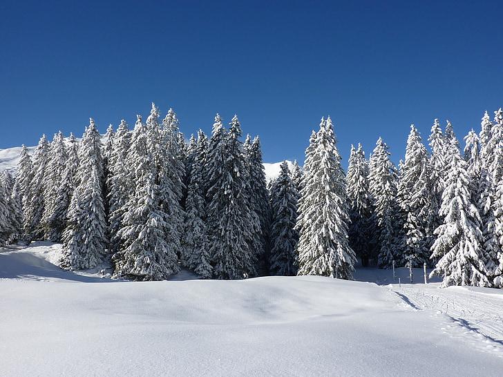 전나무, 자연, 숲, 눈 덮인, 겨울, 눈, 겨울 매직