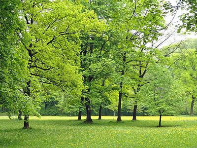 germany, nature, trees, foliage, woods, outside, landscape
