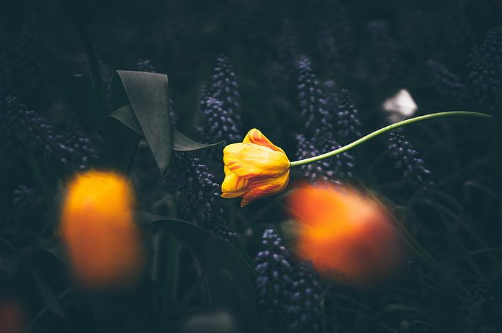 selective, focus, photography, orange, petaled, flower, yellow