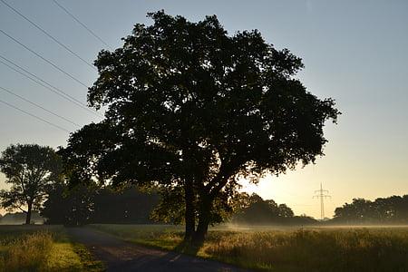 matí, natura, bosc, camp, sol, morgenstimmung, en la matinada