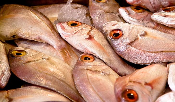 ribe, trg, hrane, morski sadeži, sveže, surovega, sredozemski