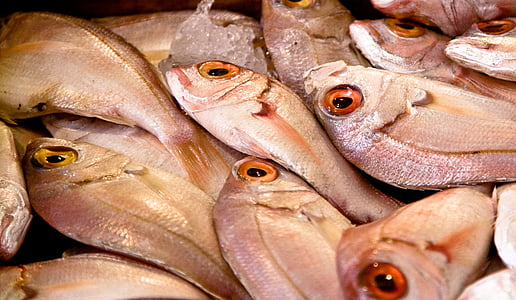 fish, market, food, seafood, fresh, raw, mediterranean