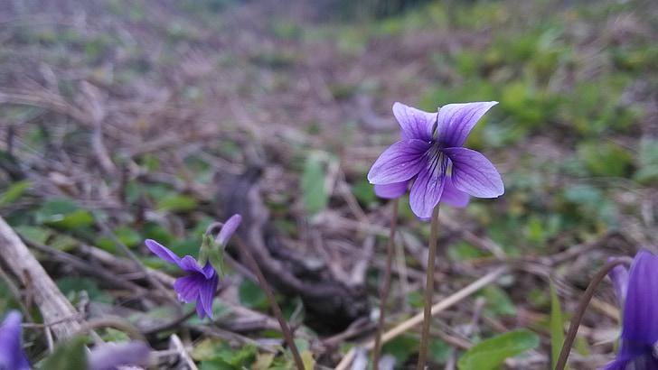 malá květina, divoké květiny, závod, květ
