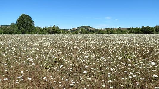 landscape, flowers, wild flowers