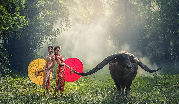 senyora, búfal, jove, feliç, Àsia, bellesa, Cambodja