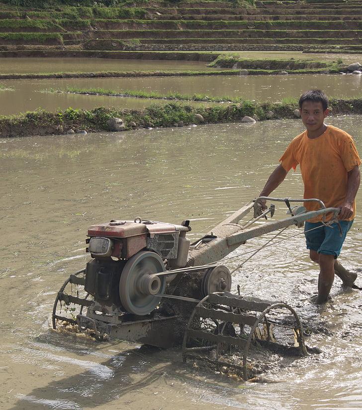 granjero, Laos, agricultura, trabajo, granja