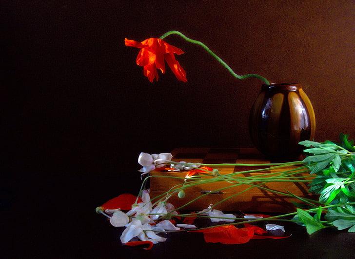 bodegons, Tulipa, flor, Junta