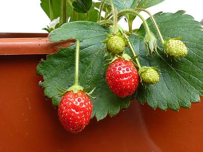 fruita, maduixa, fruits vermells