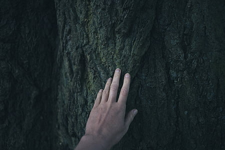 hand, tree, human hand, human body part, human finger, real people, one person