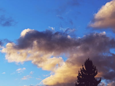 clouds, sky, blue, tree, silhouette, fir, conifer