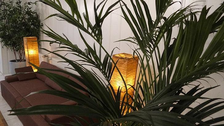 sofà, sofà, recepció, zona tranquil·la, làmpades, planta, decoració