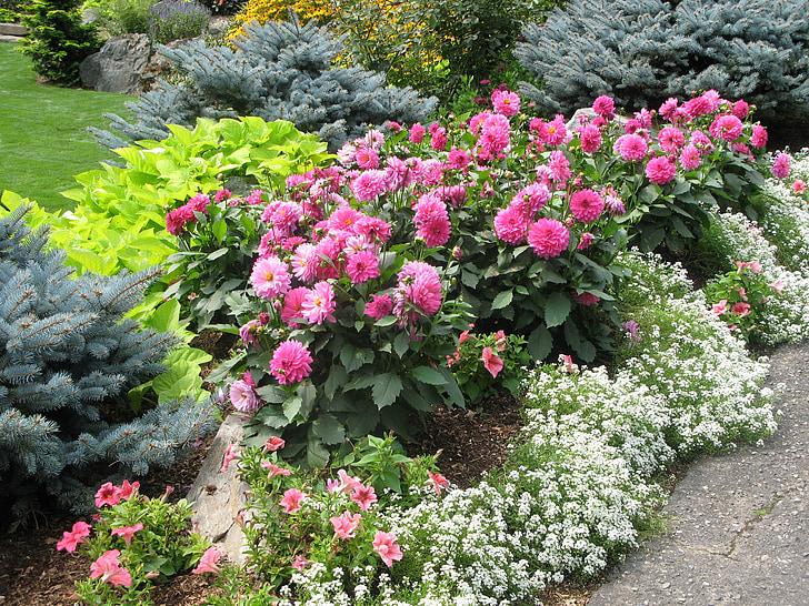 hage, blomster, hagearbeid, natur, våren, hage blomst