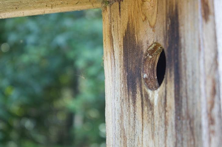 Luonto, Linnut, puu, Wildlife, Bird house, puinen