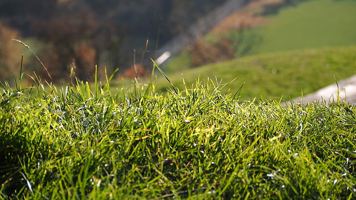 Λιβάδι, χλόη, πράσινο, φύση, χόρτα, λεπίδα του χόρτου, Κήπος